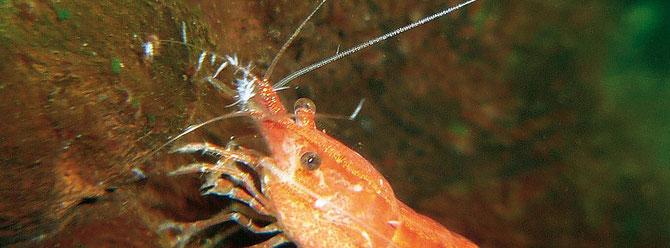 Scutariella-Befall im Bereich der Antennenpaare. Foto: Michael Hoffmann