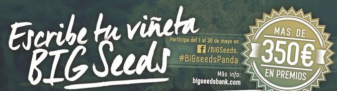 concurso semillas marihuana big seeds, gana semillas marihuana gratis con el panda biggie