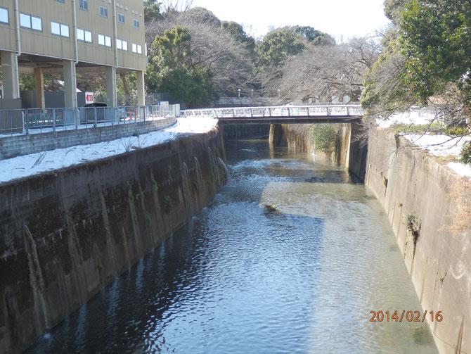 中之橋より「としまえん」を望む。石神井川は「としまえん」の中を流れてここに出てくる。自然景観を残した公園づくりが望まれる。