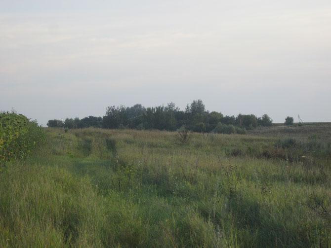 Ві села лишились лише зарослі дерев, серед яких досі є фруктові