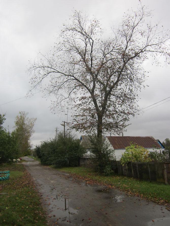 ...і немаленькі дерева