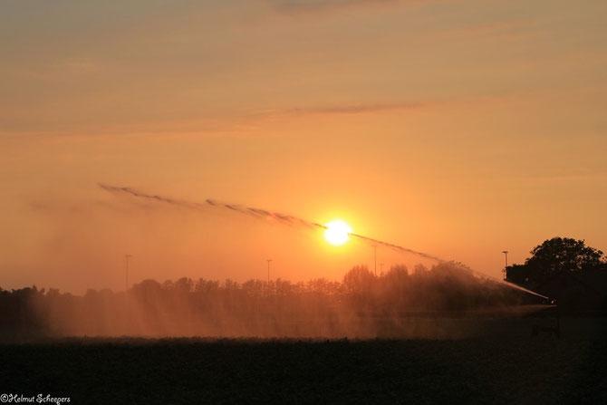 Feldbewässerung im Sonnenuntergang