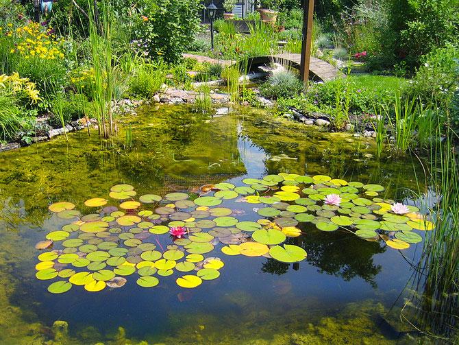 Der Teich, klar nur durch den Filtergraben