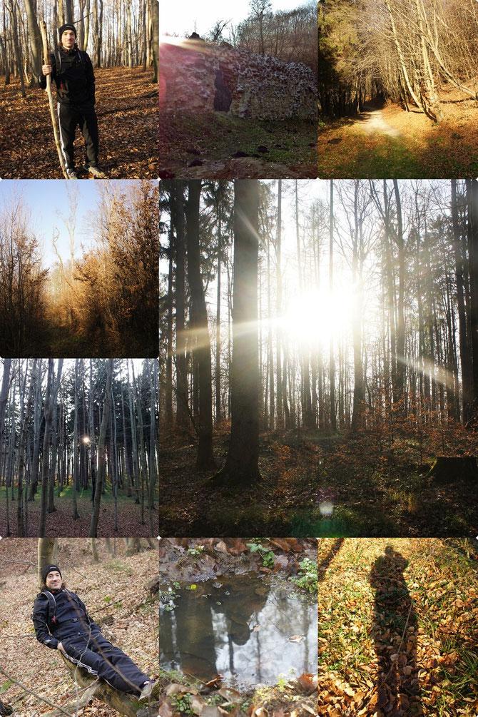 Wunderschöner Waldspaziergang heute vormittag!