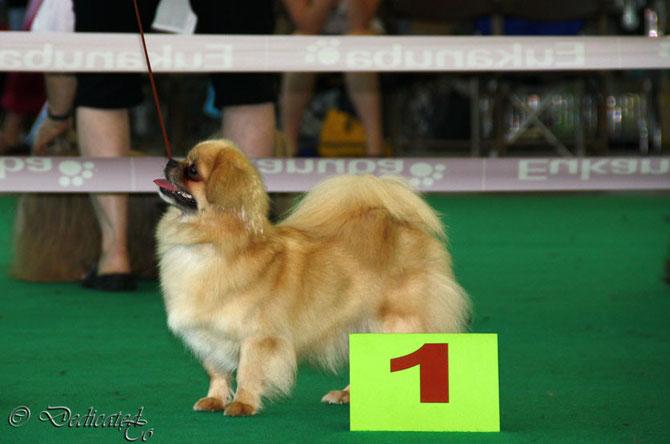 Blondy BOS & International Champion