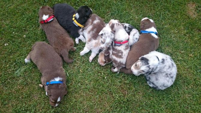 Halsbandtraining auf dem Gras, wir sind müde 😍