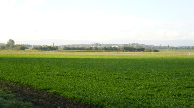Bild: Blick von Mühlenberg Richtung Ronnenberg und Deister