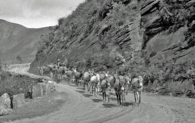 Donkey wagon - Garcia Pass, photograph by Collingwood Ingram