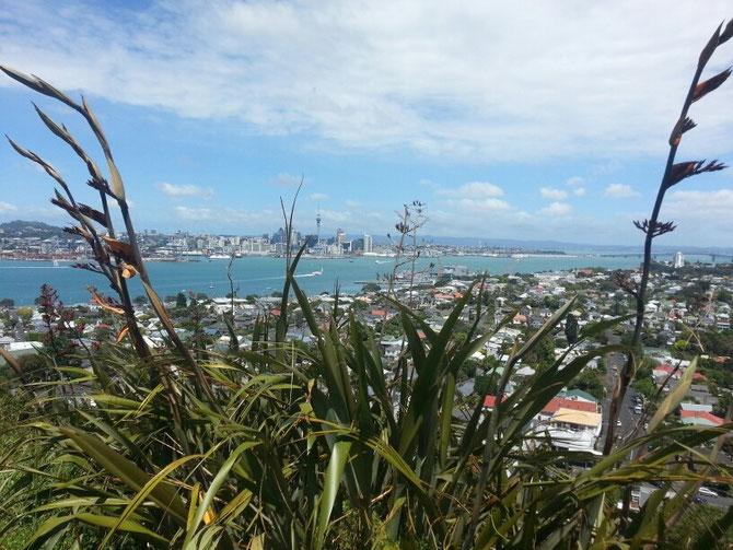 Blick vom Mount Victoria in Devonport auf Downtown Auckland