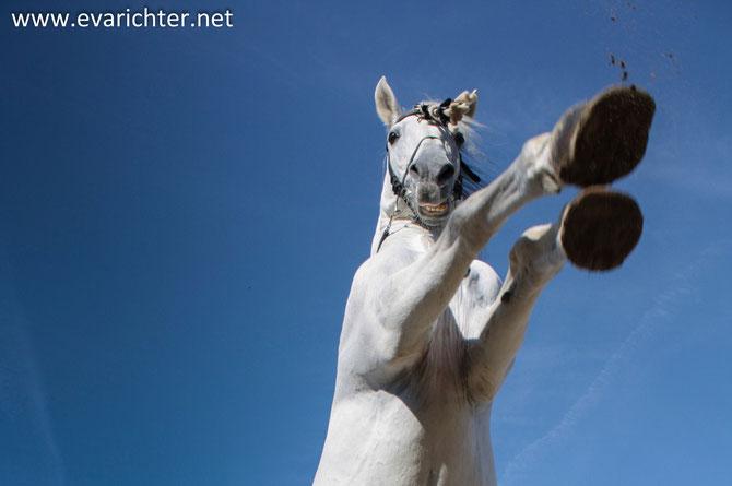 Pferdeshooting Richter-Kernreich Pferdebilder