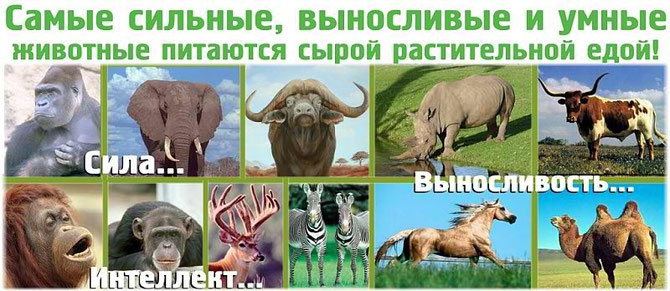Самые сильные животные не едят мяса