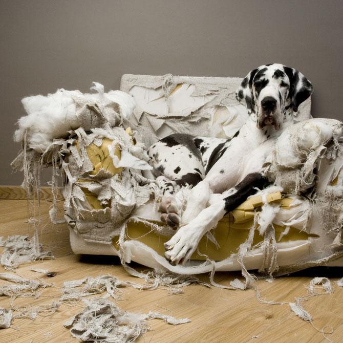 Verhaltensoriginelle Hunde