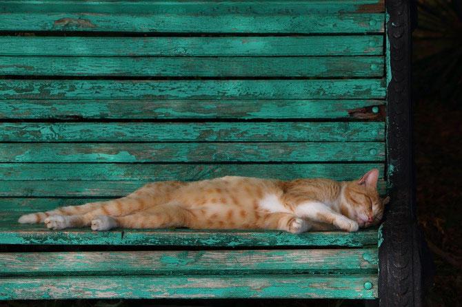 Ce chat du parc Dendrariy mêne une existence pour le moins agréable !