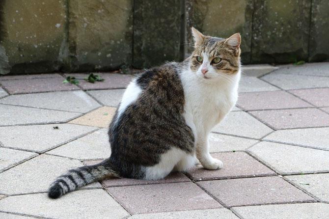Présents à tous les coins de rue, les chats de Sochi ne sont pas farouches ! Cliché Pierre BAZIN