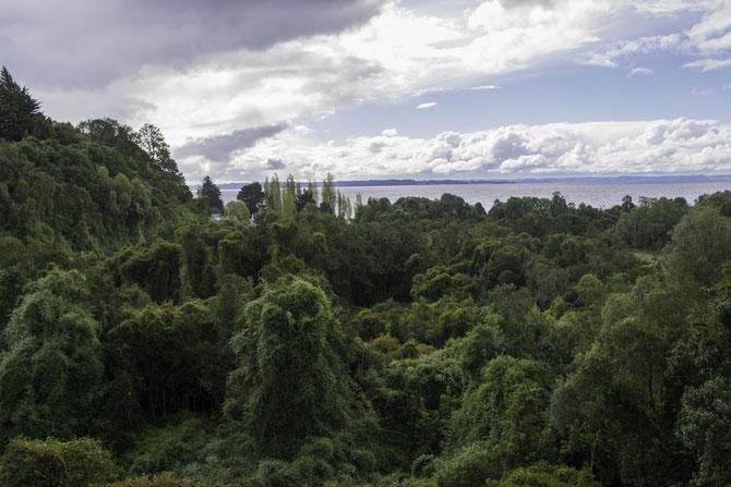 Dichter Urwald umgibt den See. Da wo die Wolken sind, sähe man die Vulkane…