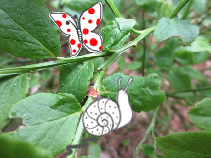 Wie lautet mein Name? Meine Früchte sind durch Schnecke und Schmetterling getarnt - sonst wäre es zu einfach!