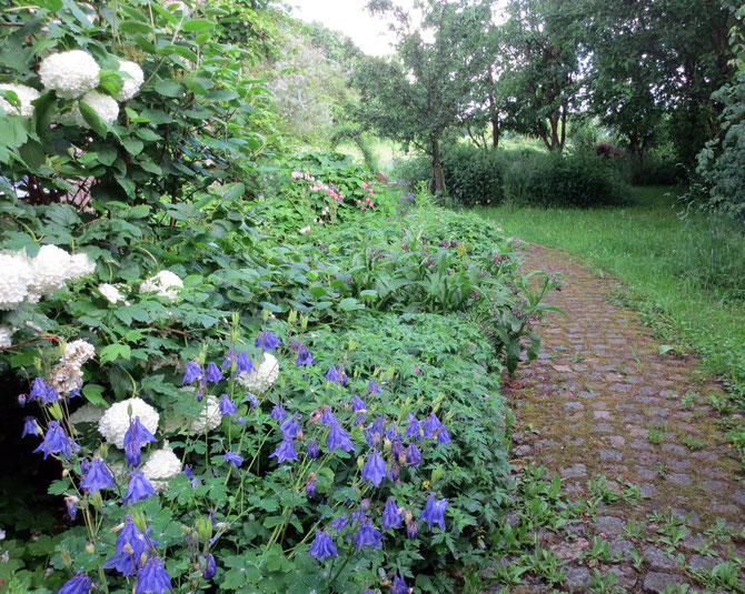 Blick in meinem Garten am Abend nach einem regenreichen Juni-Tag.
