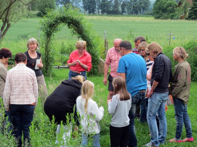 Wildkräutererlebnis im Sommer 2016 - Beschnupperung/Verkostung des aromatischen Gundermanns