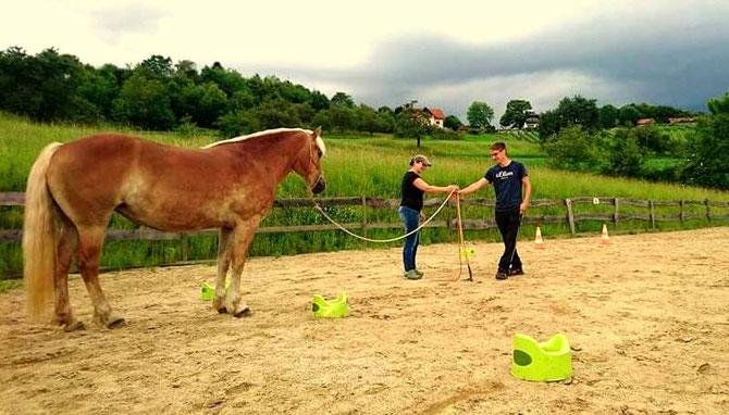 Martina Jeremic - Horsemanship - Problempferde - Jungpferdetraining