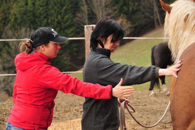 Horsemanship Kurs -  Martina Jeremic - Problempferde