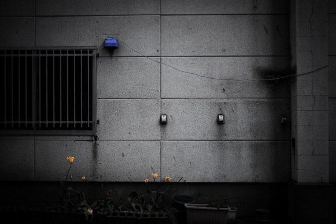 日本 北海道 札幌 野村大 補色のカンケイ
