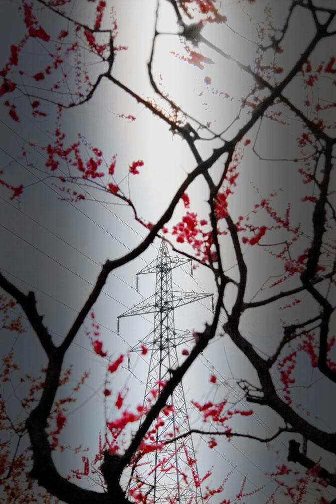 日本 北海道 札幌 平岡公園の鉄塔と梅林
