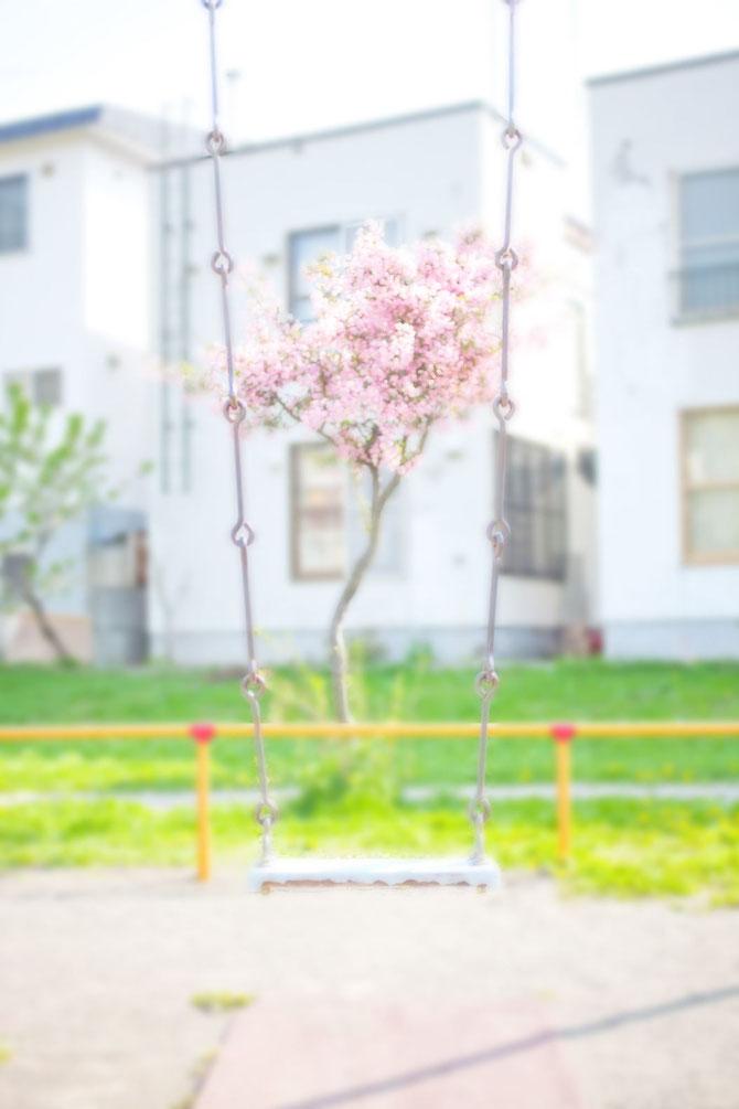日本 北海道 札幌 公園のさくら