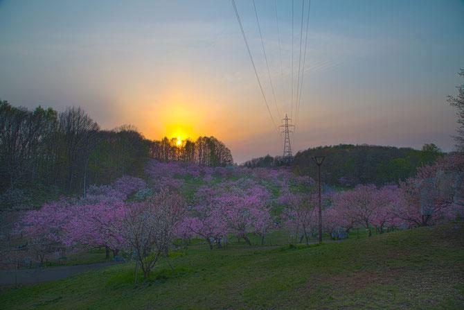 日本 北海道 札幌 夕暮れに沈む平岡梅公園 HDR