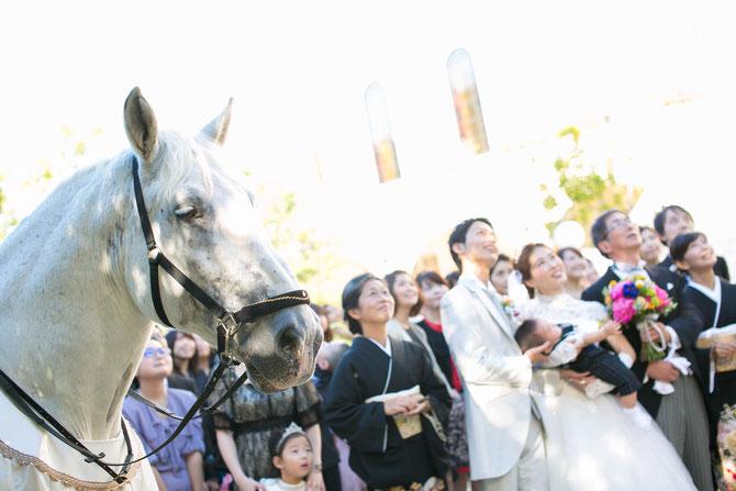 ペルシュロン マリンゴ 結婚式を目撃 証言者
