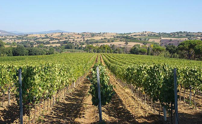 Val delle Rose, Cecchi Winery, Maremma. Grosseto, Toscana, Italy. Etesiaca, Itinerari di vino.