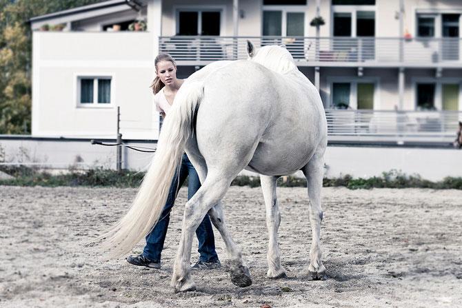 Christina Hummel Pferdetraining Tirol Schwaz Unterland mobiler Unterricht Reitlehrer Pferdetrainer fair ruhig individuell Bodenarbeit Reiten