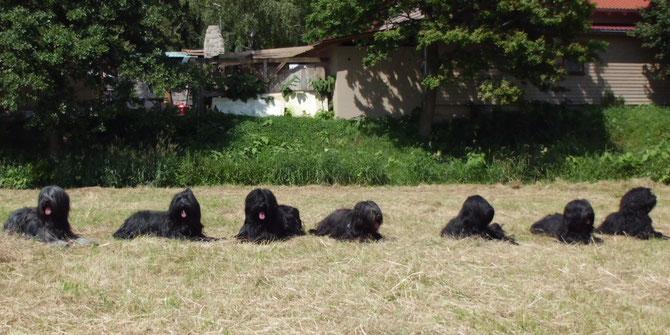 von rechts nach links: Hemingway, Aruba, Elyssa, Candela, Gimli, Coffee und Nayla (Gomera)