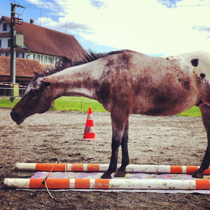 Boogy, als Anhaltspunkte können Pylonen oder andere Objekte dienen, damit das Pferd weiss, wo es anhalten soll