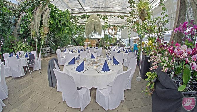 Orchideenhaus Müller Steinmaur Gewächshaus Hochzeit Heiraten Wedding DJ Benz