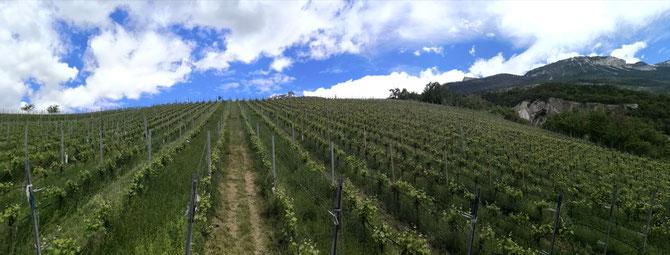Bioweinberg besichtigen Wallis