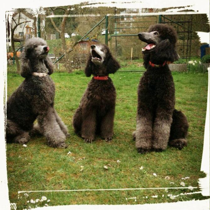 Lola, Birke und Gordi , 5 Jahre, 4,5 Monate und 1,5 Jahre