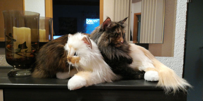 Ein sehr bequemes Kissen, diese Steiffkatze...:-))