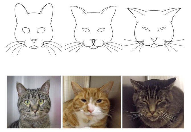 Hinweise Schmerzen Katzen nach OP Schmerzskala