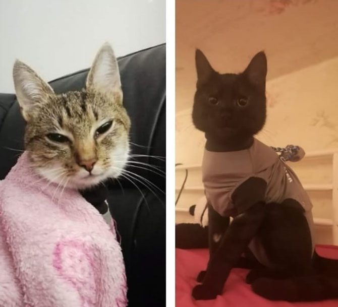 Katzen nach Operation Schmerzgesicht