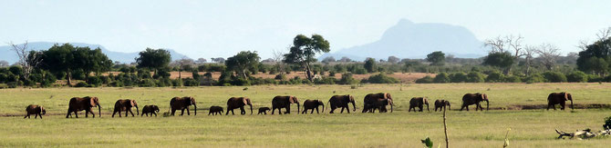 Kenya Wildlife National Park