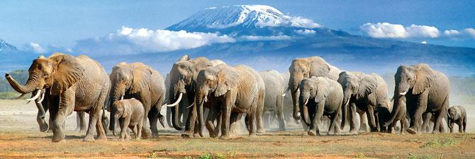 Parco Nazionale Amboseli. Sullo sfondo il Kilimanjaro