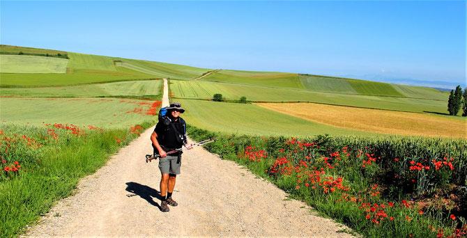 Auf dem Camino