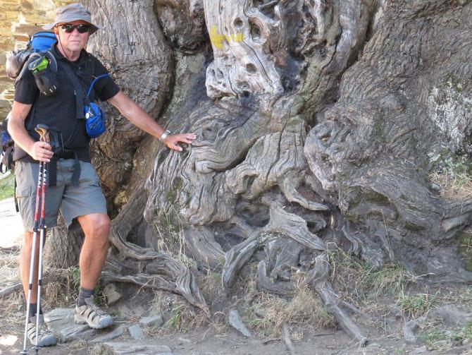 ...und die Bäumer zauberhafter