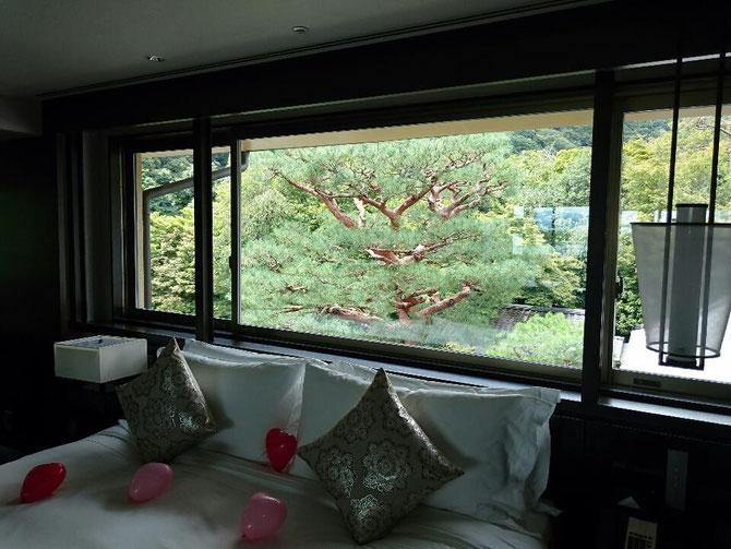 嵐山にある高級ホテルの一室 赤松が見事です。