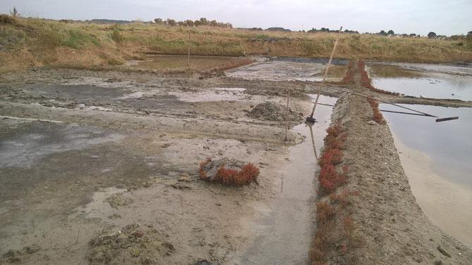 terrain mal entretenue sur plusieurs années travail baclé  part l'ancien stagiaire  gros chantier pour danien