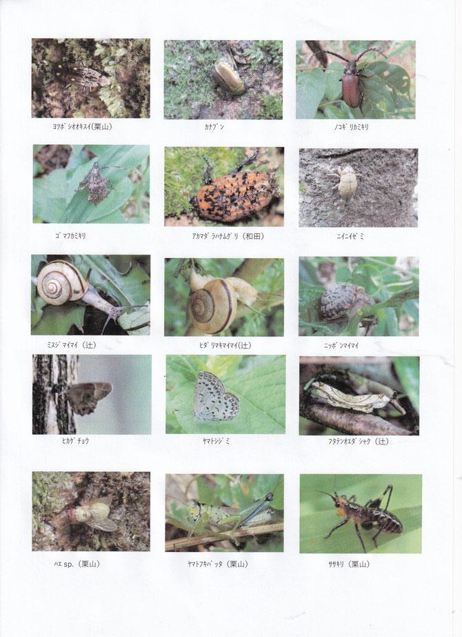 7月13日たろやま生き物調査写真集2
