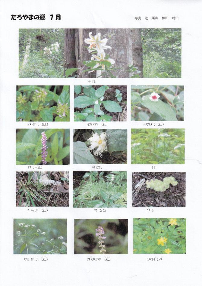 7月13日たろやま生き物調査写真集1
