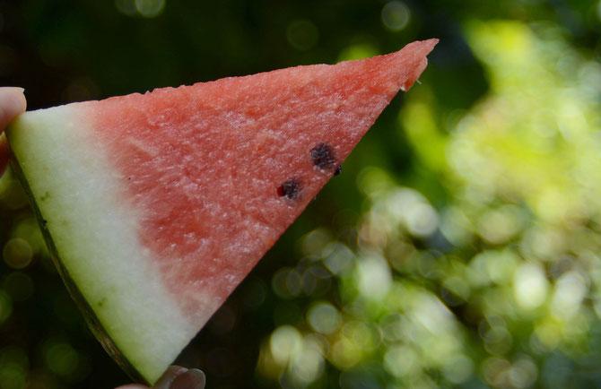 Tag 9 - Melone - Melon