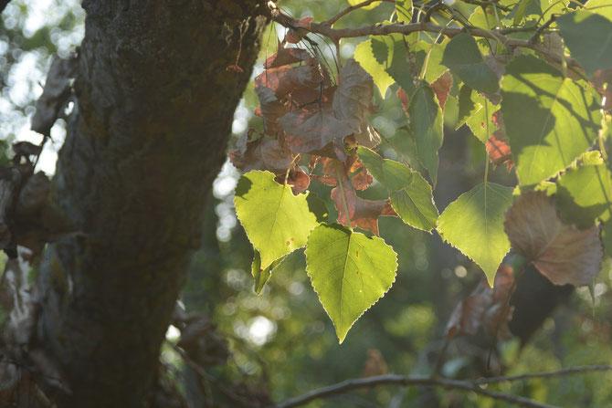 heARTs in the tree - Herzen für Kunst im Baum