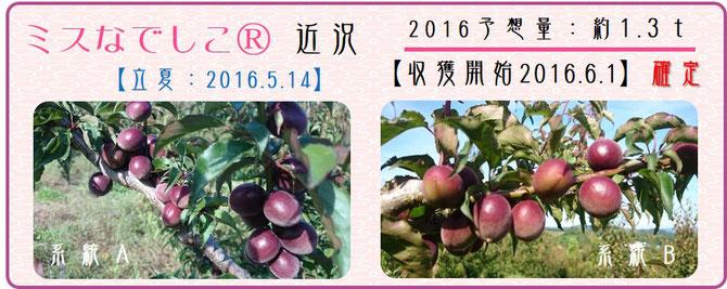 ミスなでしこⓇ 2016収獲スタート確定 和×夢 nagomu farm